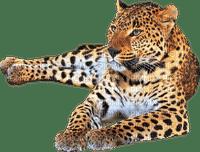 image encre la nature animal à pois guépard léopard  edited by me
