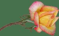 rose, ruusu, kukka, flower, fleur