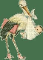 stork baby  cigogne  bebe