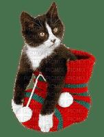 cat chat katze animal animals   christmas noel xmas weihnachten Navidad рождество natal  tube
