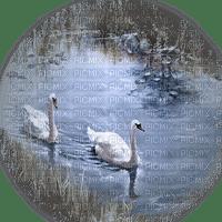 swans lake cygne lac