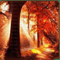 automne paysage autumn forest