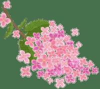 Sakura fleur rose pink flower cherry cerise