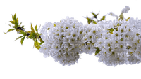 flower fleur blossom blumen branch