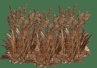 herbe, roseau, marais,deco,tube,paysage, Pelageya