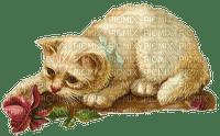 chat vintage cat vintage