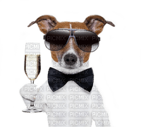 dog hund chien animal fun sekt drink summer ete glasses glass  tube