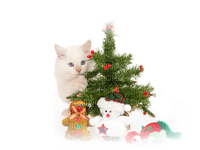 Kaz_Creations Paysage Scenery Cat Kitten Christmas