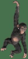 hanging monkey, sunshine3