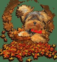 dog autumn leaves chien automne feuilles