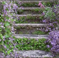 stone stairway garden jardin d'escalier en pierre