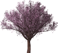 spring printemps frühling primavera весна wiosna  arbre baum tree  garden jardin tube deco fleur bloom blüten blossom purple nature