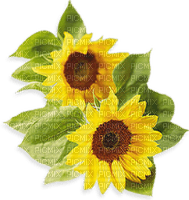 munot - blumen sonnenblumen - flowers sunflowers - fleurs tournesols