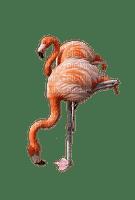 Flamingo bp