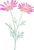 Margurites roses marguerite rose fleurs roses fleur rose nature debutante pink daisy pink flower