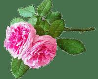 kukka flower fleur ruusu roses