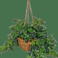 Fleurs, Plant