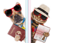 dog cat passport vacation chien chat vacances passeport