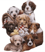 Puppy's Joyful226