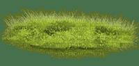 gräs--natur
