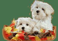 chien automne dogs autumn