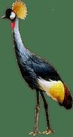 crane exotic bird