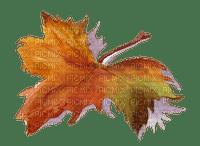 leaves autumn feuilles automne