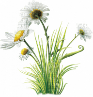 Kaz_Creations Deco Garden Grass Flowers