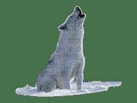loup,hurle,neige.
