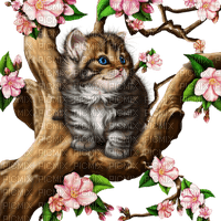 cat chat katze tree arbre baum branch ast flower fleur blossoms blüten spring printemps  deco  fun  summer ete  tube  sommer animal