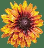 Fleur.Flower.Sunflower.Tournesol.Victoriabea