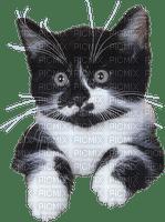 Chat.Cat.Gato.Katze.Victoriabea