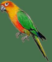 parrot katrin