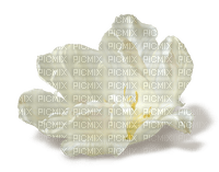fleur blanche.Cheyenne63