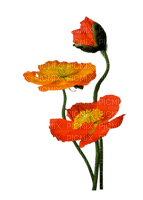 Fleurs.orange.Flowers.Victoriabea