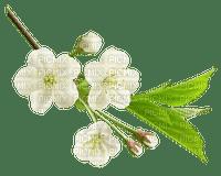 spring printemps frühling primavera весна wiosna  branch zweig leaves petals branche   garden jardin tube deco fleur bloom blüten blossom nature pétales ast