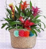 Flowers fleurs flores panier