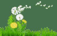 pissenlit dandelion  grass