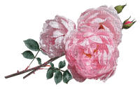 kukka, flower, fleur, ruusu, rose