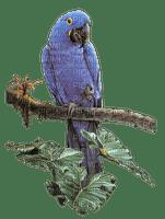 spring printemps bird vögel oiseaux deco tube garden  vogel oiseau birds papagei blue
