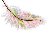 plumes feather
