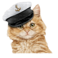 chat êtê maritime cat summer