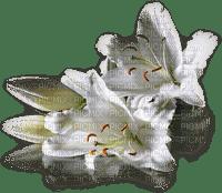 chantalmi fleur blanche