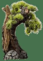 bonsai,tree