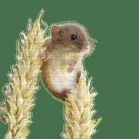 mouse maus souris summer ete corn field tube animal feld champ de blé cornfield grain korn