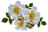 kukka fleur flower rose ruusu