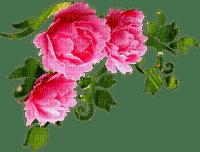 peony flower corner deco pivoine fleur coin