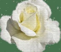 trandafir38