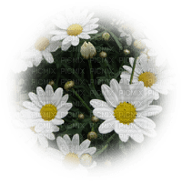 blommor--flowers--white--vit