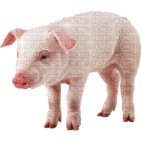 Kaz_Creations Animals Pig